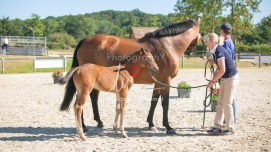 Foal 15 HDP régional 2020-159752