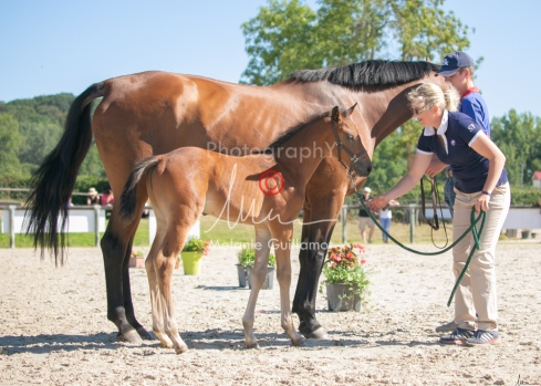 Foal 15 HDP régional 2020-159758