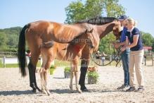 Foal 15 HDP régional 2020-159760