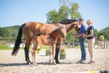 Foal 15 HDP régional 2020-159761