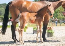 Foal 15 HDP régional 2020-159762