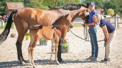 Foal 15 HDP régional 2020-159768