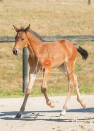 Foal 15 HDP régional 2020-159785
