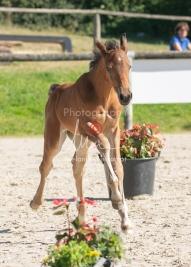 Foal 15 HDP régional 2020-159792