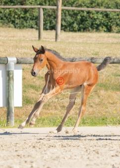 Foal 15 HDP régional 2020-159798