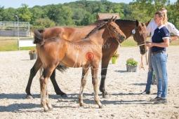 Foal 16 HDP régional 2020-169940