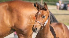 Foal 17 HDP régional 2020-170104