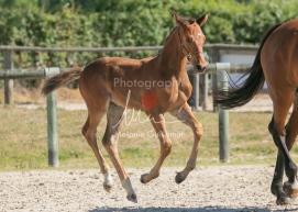 Foal 17 HDP régional 2020-170111