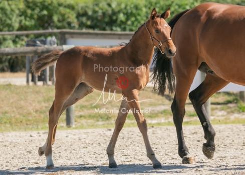 Foal 17 HDP régional 2020-170112