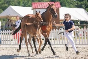 Foal 17 HDP régional 2020-170115