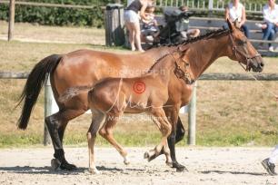 Foal 17 HDP régional 2020-170120