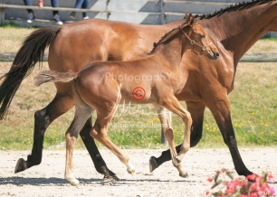 Foal 17 HDP régional 2020-170122