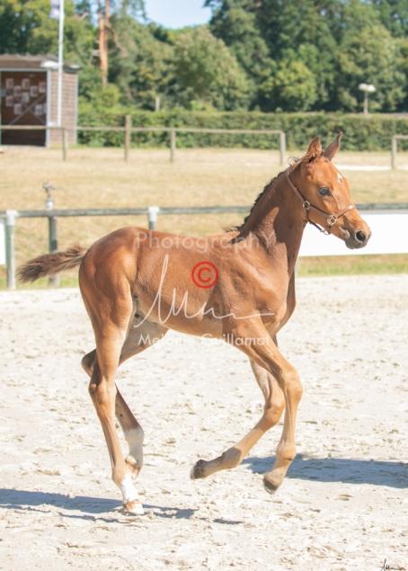 Foal 17 HDP régional 2020-170129