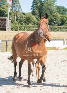 Foal 17 HDP régional 2020-170136