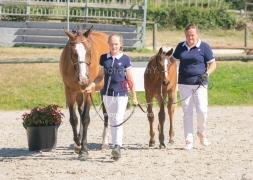 Foal 18 HDP régional 2020-180143