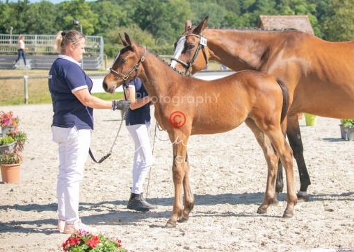 Foal 18 HDP régional 2020-180151