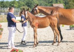 Foal 18 HDP régional 2020-180155
