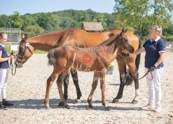 Foal 18 HDP régional 2020-180157