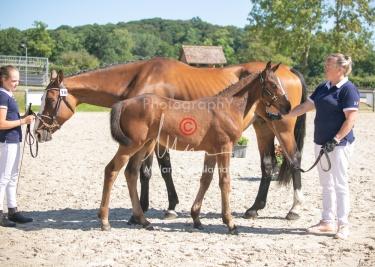 Foal 18 HDP régional 2020-180158
