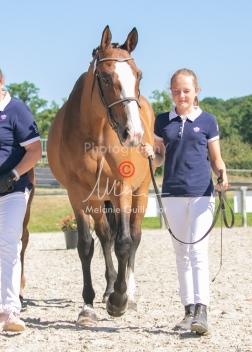 Foal 18 HDP régional 2020-180170