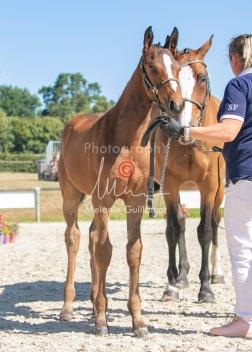 Foal 18 HDP régional 2020-180173