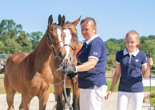 Foal 18 HDP régional 2020-180175