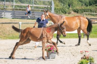 Foal 18 HDP régional 2020-180190