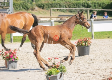 Foal 18 HDP régional 2020-180191