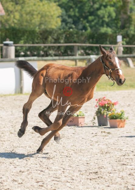 Foal 18 HDP régional 2020-180195