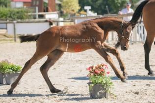 Foal 18 HDP régional 2020-180197