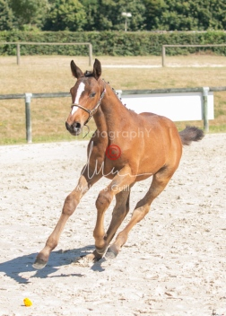 Foal 18 HDP régional 2020-180210