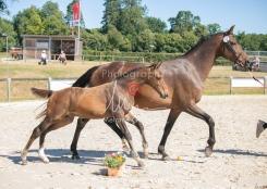 Foal 19 HDP régional 2020-190259