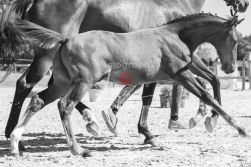 Foal 19 HDP régional 2020 nb-190274