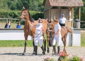 Foal 20 HDP régional 2020-190283