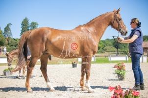 Foal 22 HDP régional 2020-220514