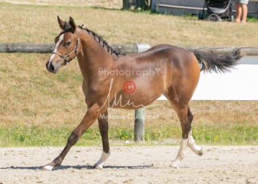 Foal 22 HDP régional 2020-220541