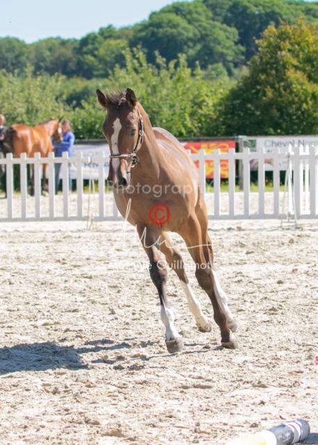 Foal 22 HDP régional 2020-220564