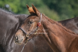 Foal 23 HDP régional 2020-230361