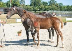 Foal 23 HDP régional 2020-230371