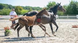 Foal 23 HDP régional 2020-230395