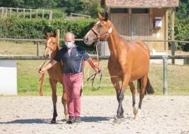 Foal 24 HDP régional 2020-220574