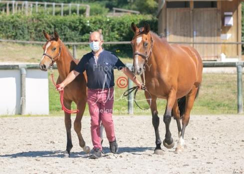 Foal 24 HDP régional 2020-220575
