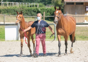 Foal 24 HDP régional 2020-220576