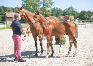 Foal 24 HDP régional 2020-240580
