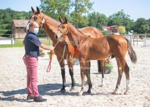 Foal 24 HDP régional 2020-240584