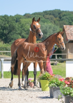 Foal 24 HDP régional 2020-240598