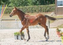 Foal 24 HDP Régional 2020-240627