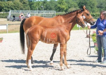 Foal 25 HDP Régional 2020-250648