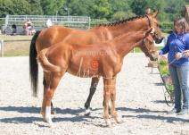 Foal 25 HDP Régional 2020-250649