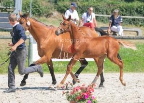Foal 25 HDP Régional 2020-250674